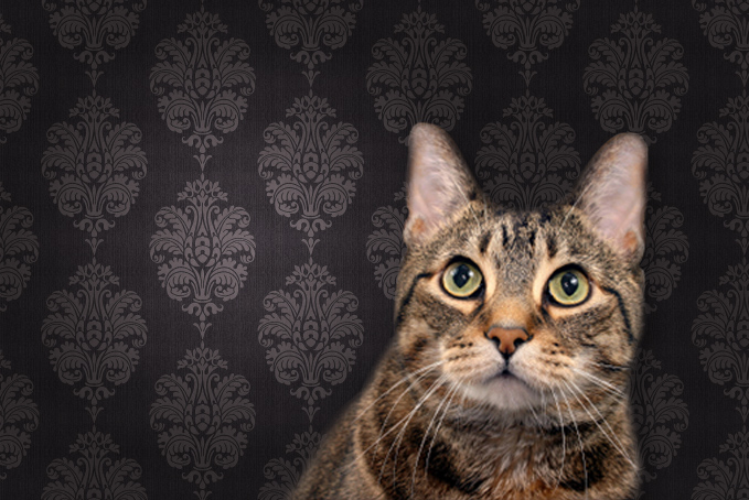 Cat against brown pattern wallpaper background