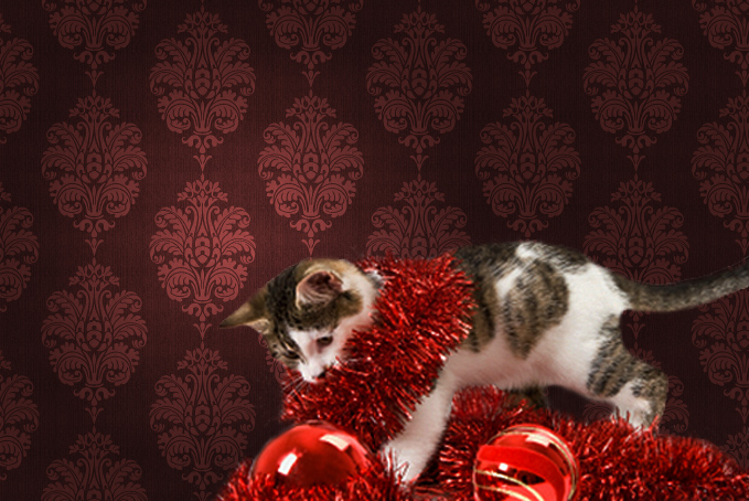 Kitten with tinsel and baubles