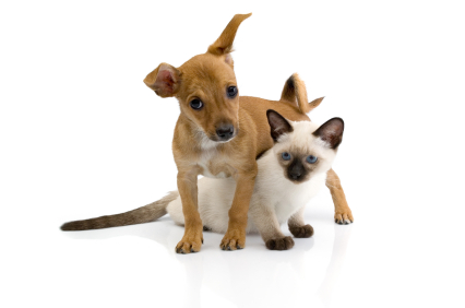 Puppy and kitten against white background