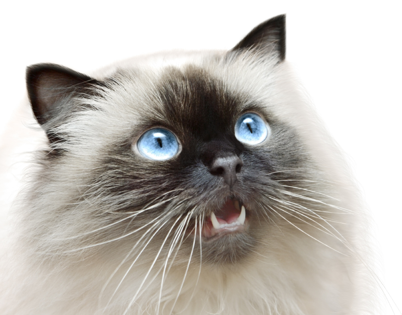 Cat looking up with mouth slightly open