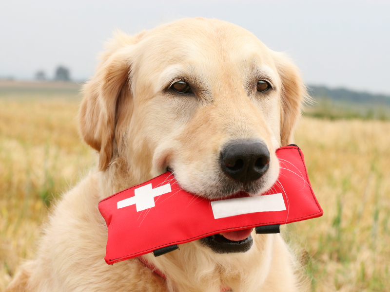 Dog holding a first aid kit