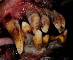 Closeup of pet's teeth
