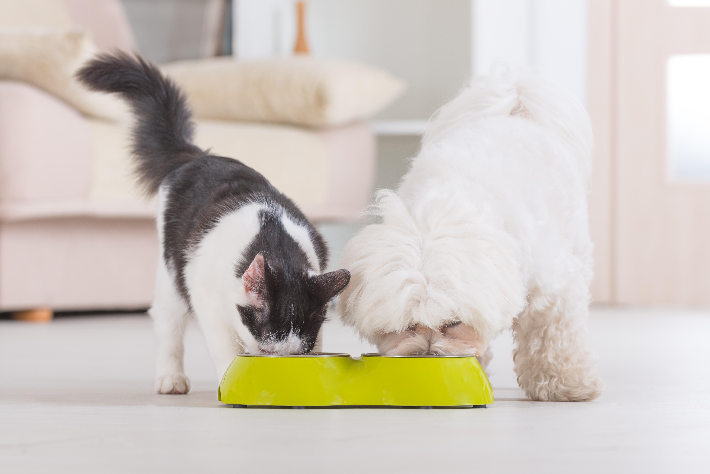 Tender Vittles Cat Food Photos Photos Fumtc Pro Plan Bright Mind