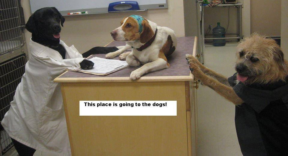 Dogs dressed as veterinary staff with This place is going to the dogs! caption