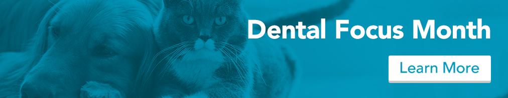 homepage_dental_blue