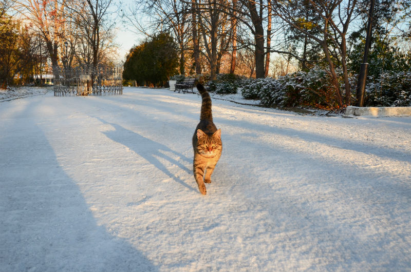 Getting Your Pets Ready for Winter Time