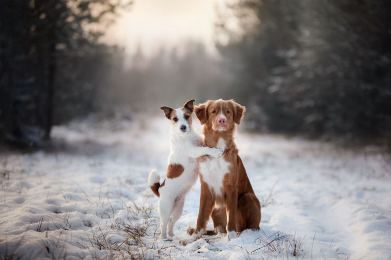 Dogs Sitting In Snow