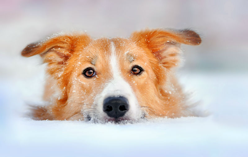 Winter and Your Pets - What You Need to Know