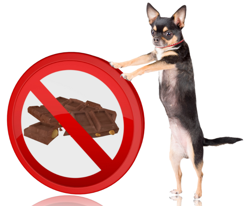 The Dangers of Chocolate for Dogs
