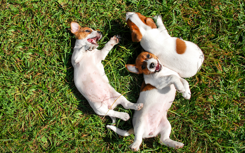 Hot Summer Tips for You & Your Pets