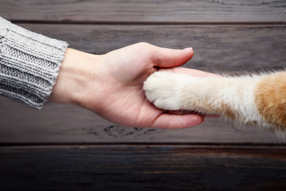 Person holding cat paw